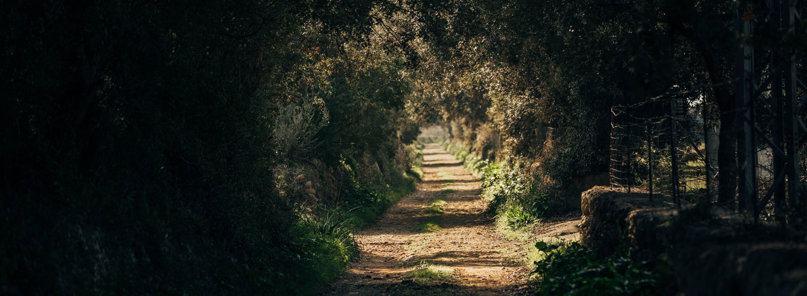 GRAVEL RIDES ON MALLORCA – FROM SAND TO DUST