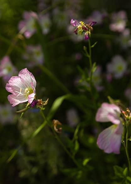 Lookbook Centifolia SS21