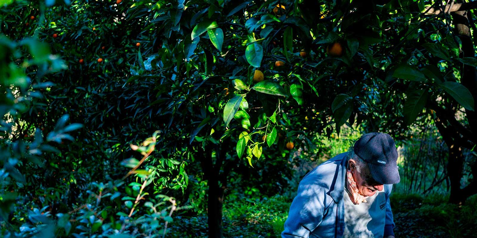 The Lemon Farmers Of The Col de la Madone