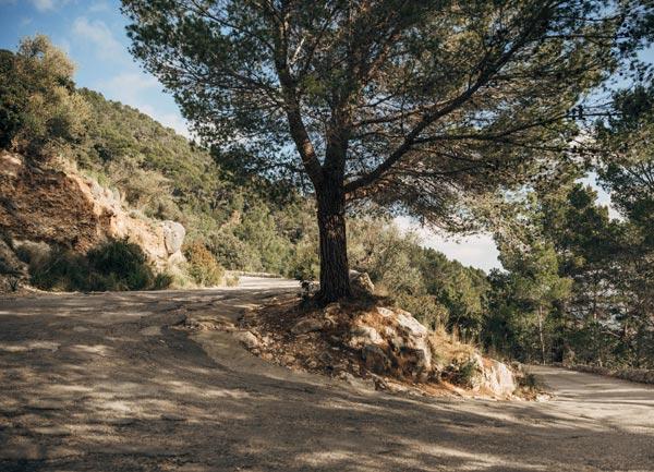 GRAVEL RIDES ON MALLORCA –  SINEU TO THE MOUNTAINS